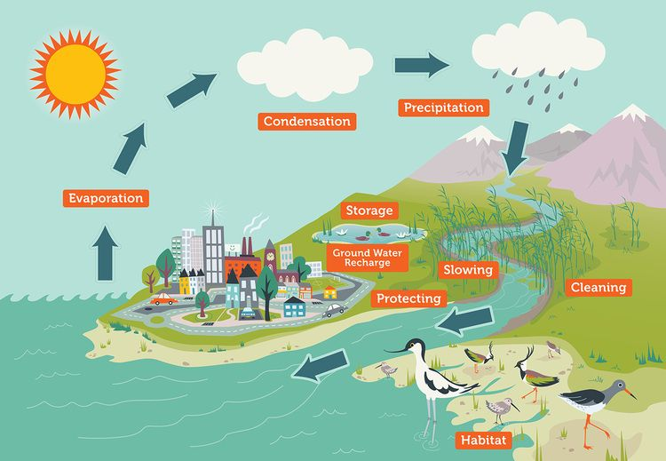 Reimagining Wetlands for Sustainable Cities and Human Settlements